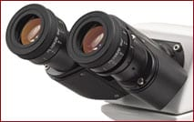 WF10x focusable eyepieces with a 20mm field of view